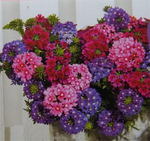 Fjolårets sommar succé hette Trixi och är en färgsprakande trio i flera olika varianter.
